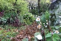 花の季節の朝庭 - 糸巻きパレットガーデン