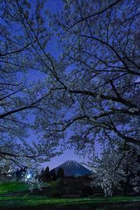 アイノの桜フレーム夜Ver - Qualia