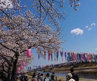 東北もやっと桜~(。◕‿◕。) - Fabulous days*