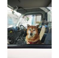 C'est mon chien. - 大阪市淀川区「渡辺ピアノ教室」