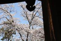 西大寺の桜(商店街はなし) - 新世界遺産への道~撤去前収集活動~