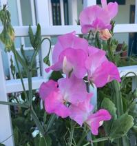 平凡な日常に戻る。。。庭の草花は無事! - アバウトな情報科学博士のアメリカ
