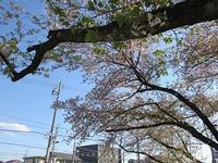 桜の様子葉桜近し - さかえのファミリー