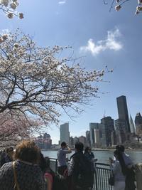 桜まつり@Roosevelt Island - asatologⅢ
