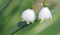 鐘の音色 - 花々の記憶