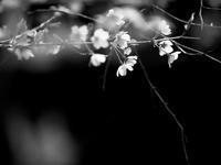 葉桜の頃 - 節操のない写真館