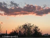 春の夕空♪~空の写真 - Lilasbouquet+HOME&F
