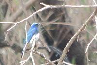 冬鳥と夏鳥が混在 - 上州自然散策2