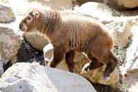 よこはま動物園ズーラシア2019年4月13日その1 - お散歩ふぉと2