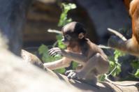よこはま動物園ズーラシア2019年4月13日その2 - お散歩ふぉと2