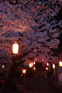 宵桜幻想 - 風の彩り-2