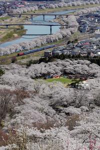 東北本線 - ED75+12系 快速花めぐり号 -2019/4/13-14 - PHOTOLOG by Hiroshi.N