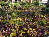 今朝の庭 - natural garden~ shueの庭いじりと日々の覚書き