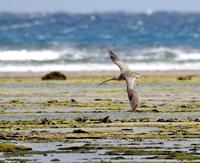 初めての奄美大島遠征(その6) - 一期一会の野鳥たち