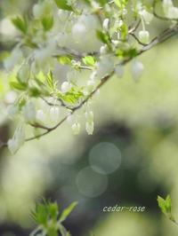春の満天星亭 - 瞳の記憶
