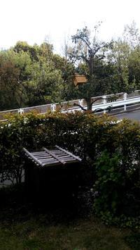 竹筒と杉板の巣箱を設置 - hills飛地 長距離自転車乗り(輪行含む)の日誌