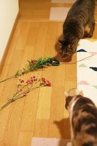 いたずら出来るほど元気 - きょうだい猫と仲良し暮らし