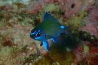19.4.16スズメのそばで - 沖縄本島 島んちゅガイドの『ダイビング日誌』