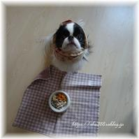 小型犬の頸椎形成不全症候群 - 狆の茶々丸