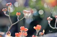 庭の花 - 晴れ時々そよ風