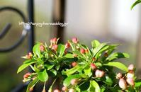 ズミの木 - 花と風の薫り