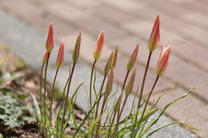 レディジェーンが危ない! - my small garden~sugar plum~