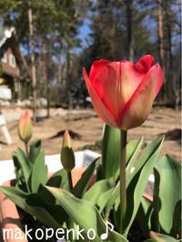 ランチとお花♪ - まこぺんこ's  WORLD      のんびり安曇野ぐらし♪