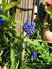 まだまだ、花粉の季節です。 - かいじゅうたちのいる我が家。