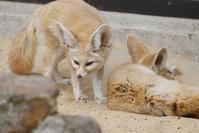 春のリスまつり - 動物園に嵌り中