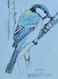 #野鳥スケッチ #ネイチャー・ジャーナル 『四十雀』 Parus minor - スケッチ感察ノート (Nature journal)