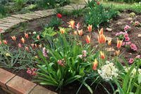 チューリップ咲いてます2019年4月中旬のマンション花壇 - ニッキーののんびり気まま暮らし