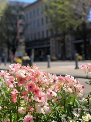 春爛漫のヨコハマ - Sweet  Davy