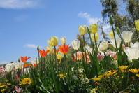 2019年4月16日 里山ガーデンフェスタ Spring - Morgenrot