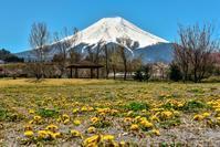 農村公園の春 - 風とこだま