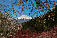 富士見孝徳公園 - 風とこだま