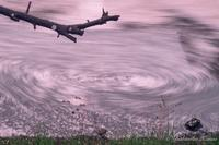 桜の花筏長秒撮影 - 写真ブログ「四季の詩」