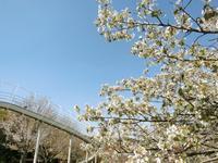 4/13、NC700Sで茅ヶ崎里山公園へ ~ 前編 - 某の雑記帳
