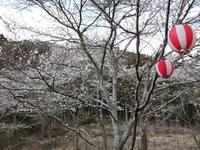 『寺尾ヶ原千本桜公園を歩いて』 - 自然風の自然風だより