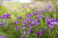 お花畑と蜂 - 良え畝のブログ