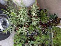 育つ、伸びる、困る - natural garden~ shueの庭いじりと日々の覚書き