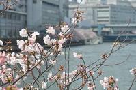 天満橋から大阪城へ・・・ - a&kashの時間。