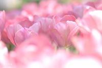 2回目の昭和記念公園の3回目 - 今日の小さなシアワセ