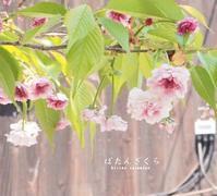 夕方 - HAIKU/summer PHOTO