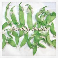 収穫。 - うさまっこブログ