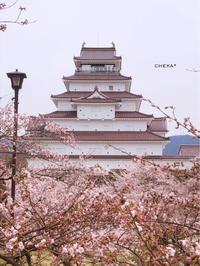 会津にも桜前線到着   春色の鶴ヶ城 - C* 日和