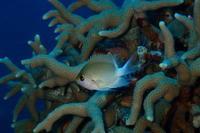 19.4.17北部ボートで - 沖縄本島 島んちゅガイドの『ダイビング日誌』