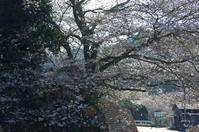 桜井市倉橋 - ぶらり記録:2 奈良・大阪・・・