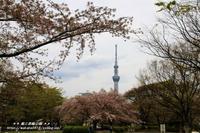 東京スカイツリ-が見える猿江恩賜公園(*^_^*) - 自然のキャンバス