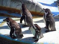 ペンギン - 自分流 Happy Life