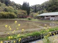 コメ作り体験―その3 - 千葉県いすみ環境と文化のさとセンター